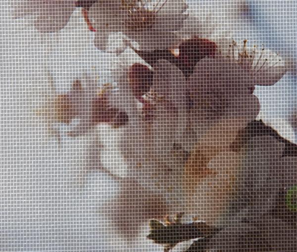 popa-fenster-Insektenschutzgitter